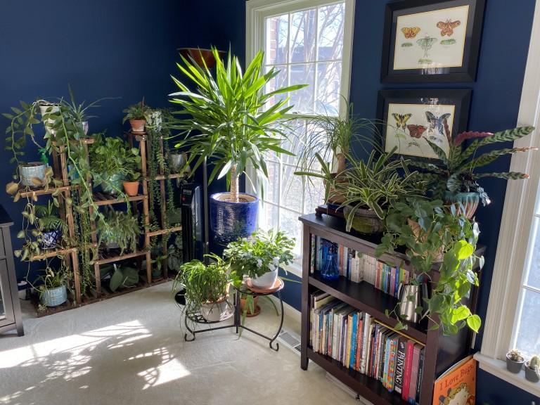 Houseplants near window