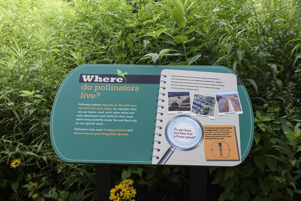 Where do polinators live?