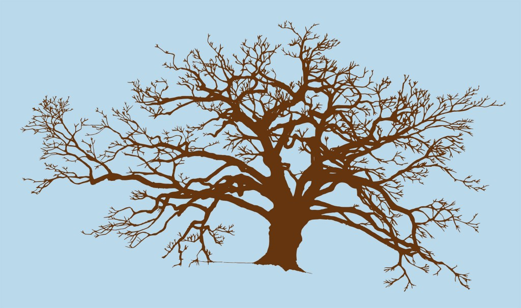 Illustration of a Chinese Hackberry Tree