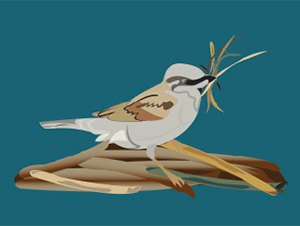 Urban Bird Habitat panels
