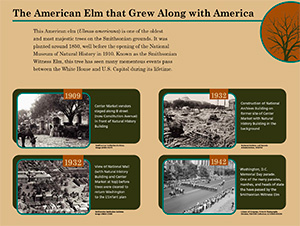 The American Elm that Grew Along with America panel