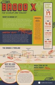 Cicadas, BroodX Poster