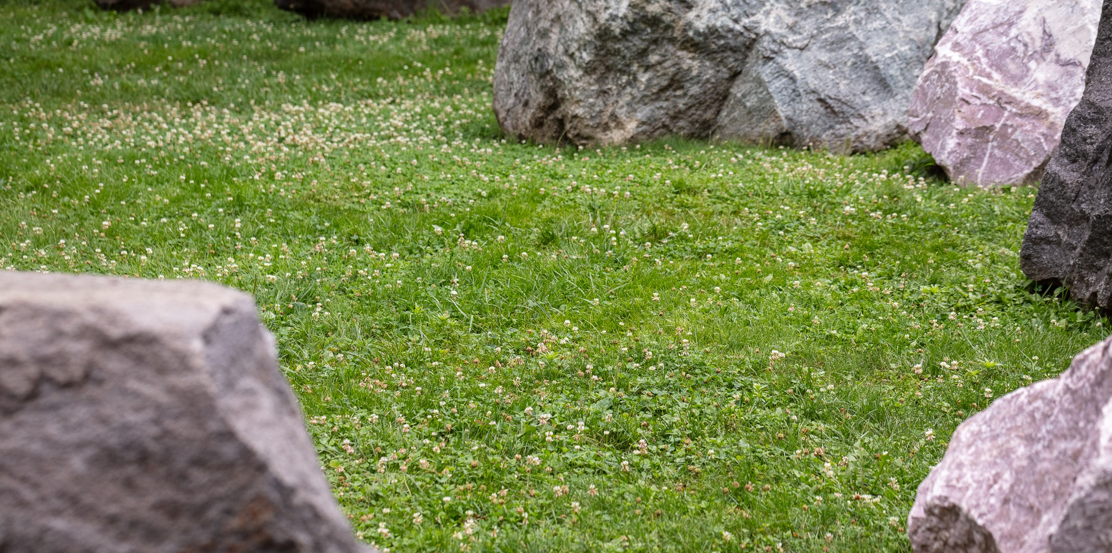 Photo of bee lawn with large rocks