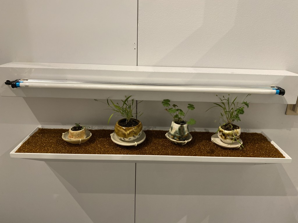 Four hand-crafted pots fashioned by the artist are on display in the exhibit, each one holding plants grown from seeds ingested by a different bird.