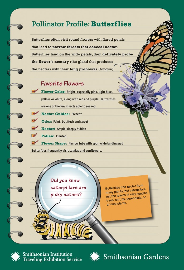 Pollinator Profile: Butterflies