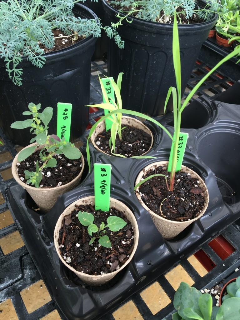 Despite the germination challenges, SG achieved enough of a success rate to deliver displayable plants.